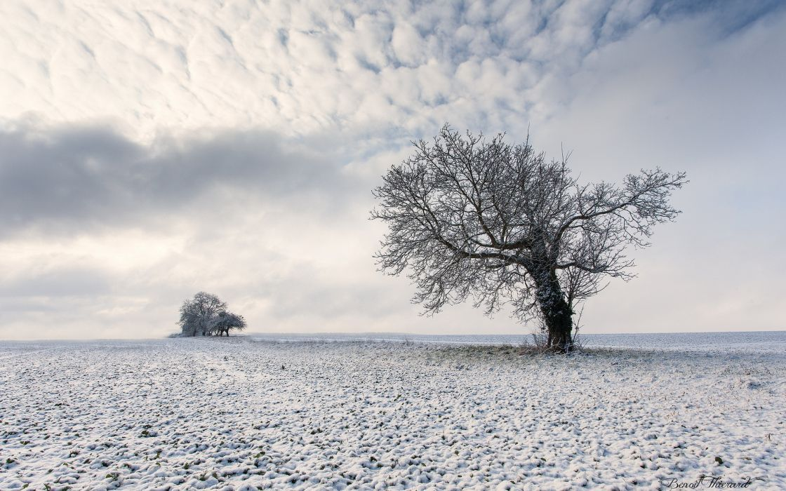nature landscapes fields trees winter snow sky clouds wallpaper