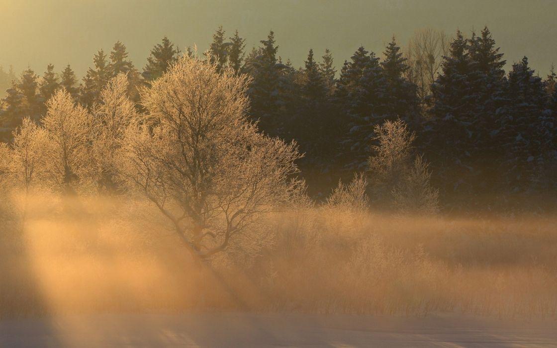 nature landscapes trees forest woods winter snow fog sunrise wallpaper