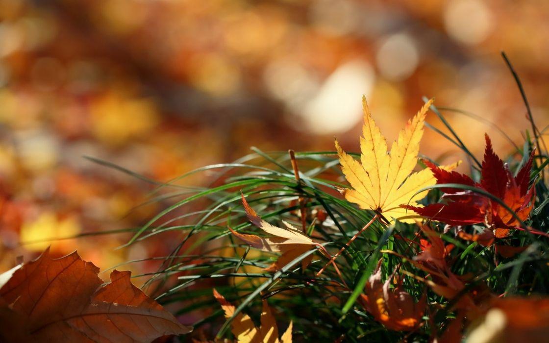 nature leaves autumn fall macro grass wallpaper