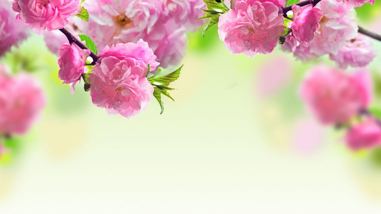 nature flowers macro pink wallpaper