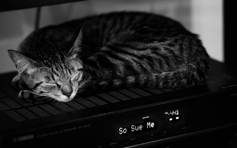 animals cats cute humor black white wallpaper