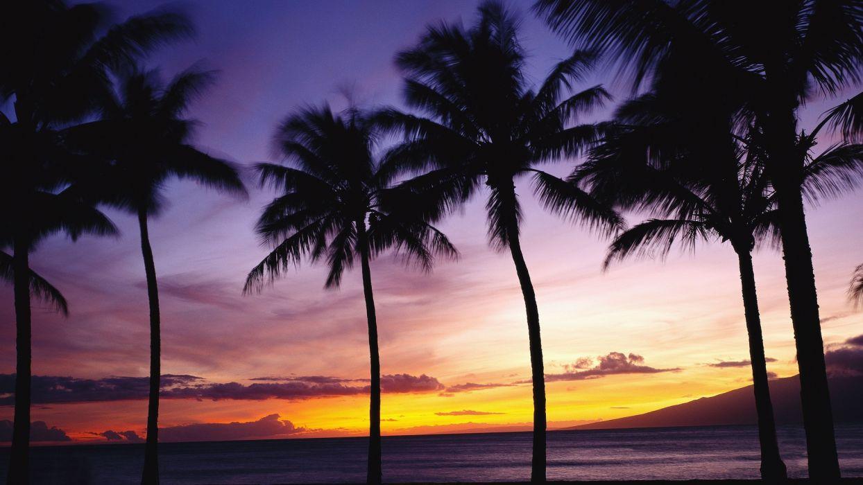 nature palm trees tropical sky sunset sunrise wallpaper