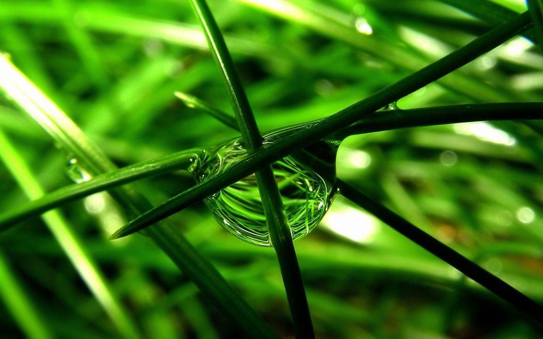 nature water drops macro green leaves plants wallpaper