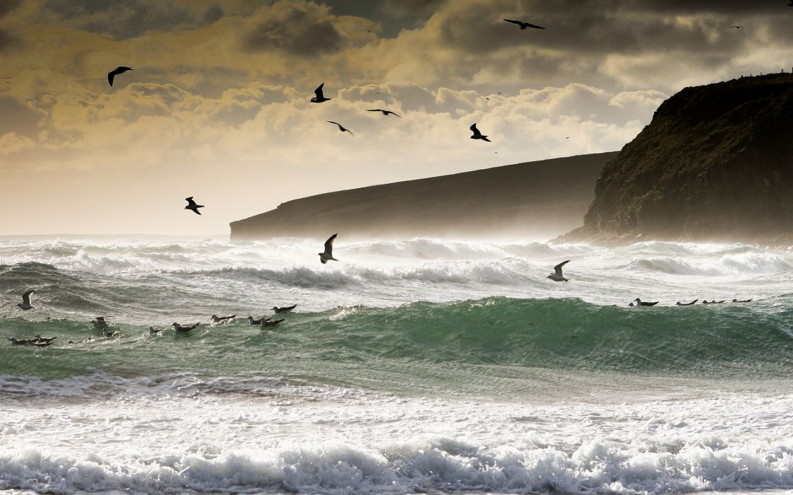 animals birds nature ocean sea waves foam spray splash landscapes coast shore clidd sky clouds wallpaper