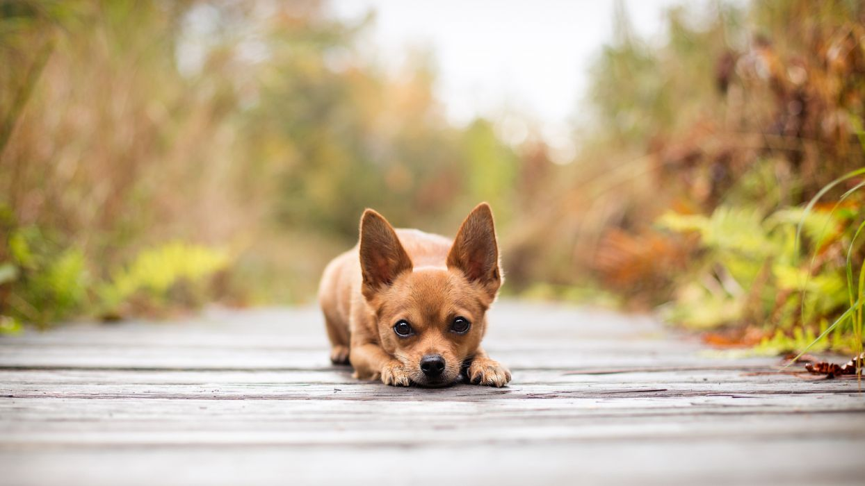 animals dogs cute canines face eyes pov wallpaper