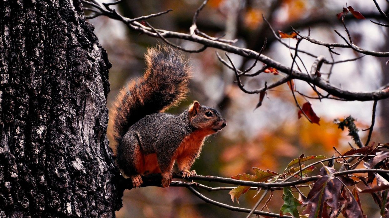 animals squirrels trees wallpaper