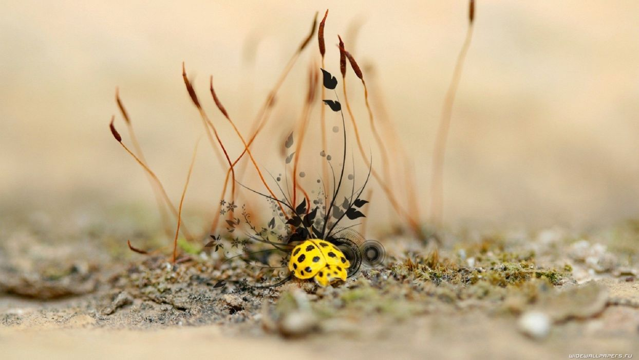 cg digital art insects ladybug ladybirds wallpaper