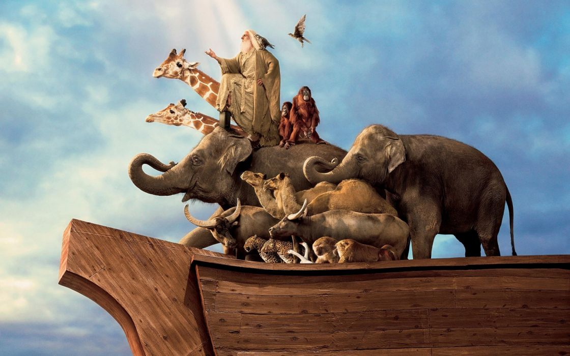 Evan Almighty religion animals camels elephants birds movies noah story actors men males people steve wallpaper