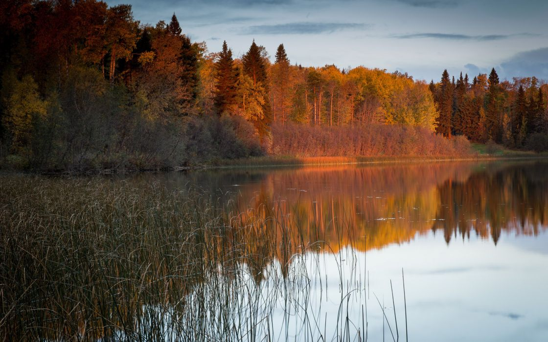 nature landscapes lakes reflection reeds grass trees forest autumn fall sky wallpaper