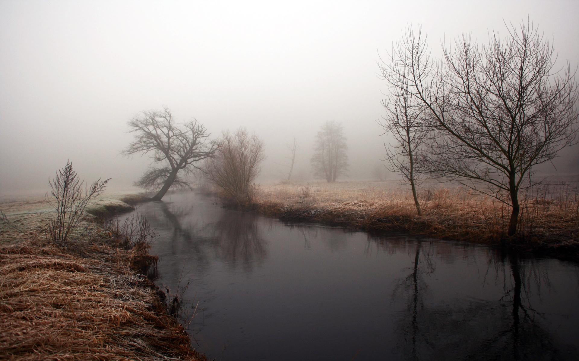 landscapes trees fog - photo #18