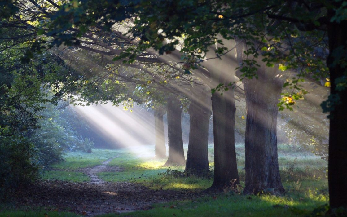 nature landscapes trees path trail sunlight filtered beams rays leaves wallpaper