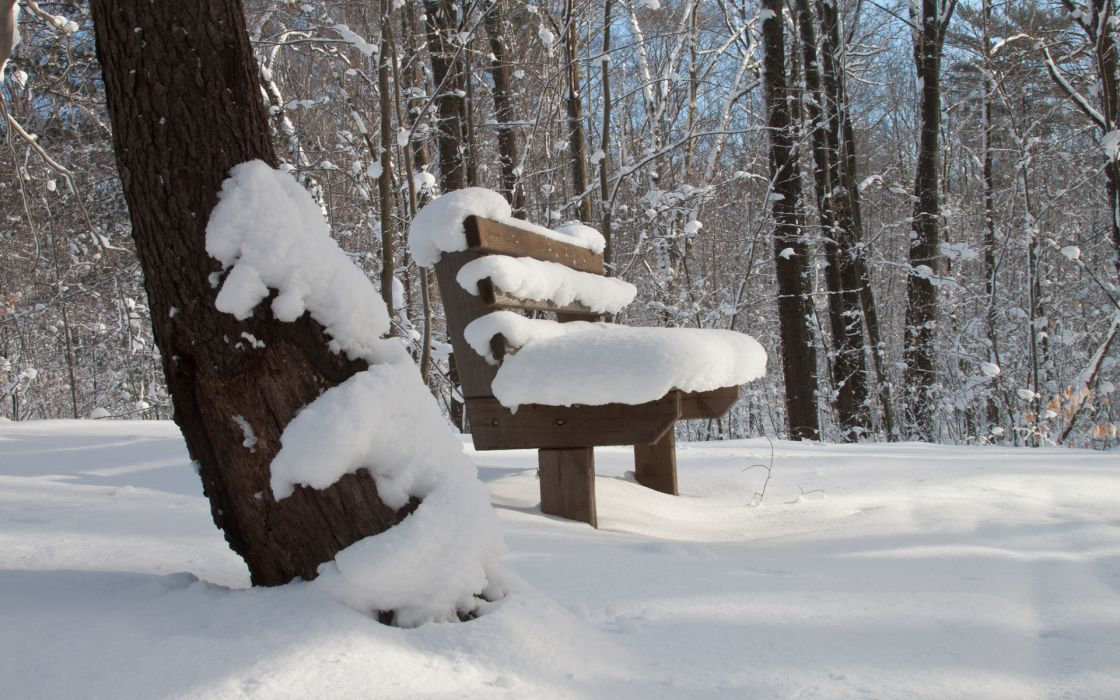 nature landscapes winter snow bench trees forest woods wallpaper