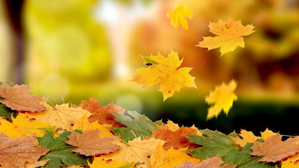 nature leaves autumn fall seasons wallpaper