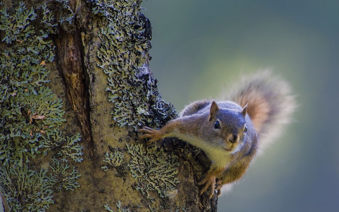 trees animals squirrels wallpaper