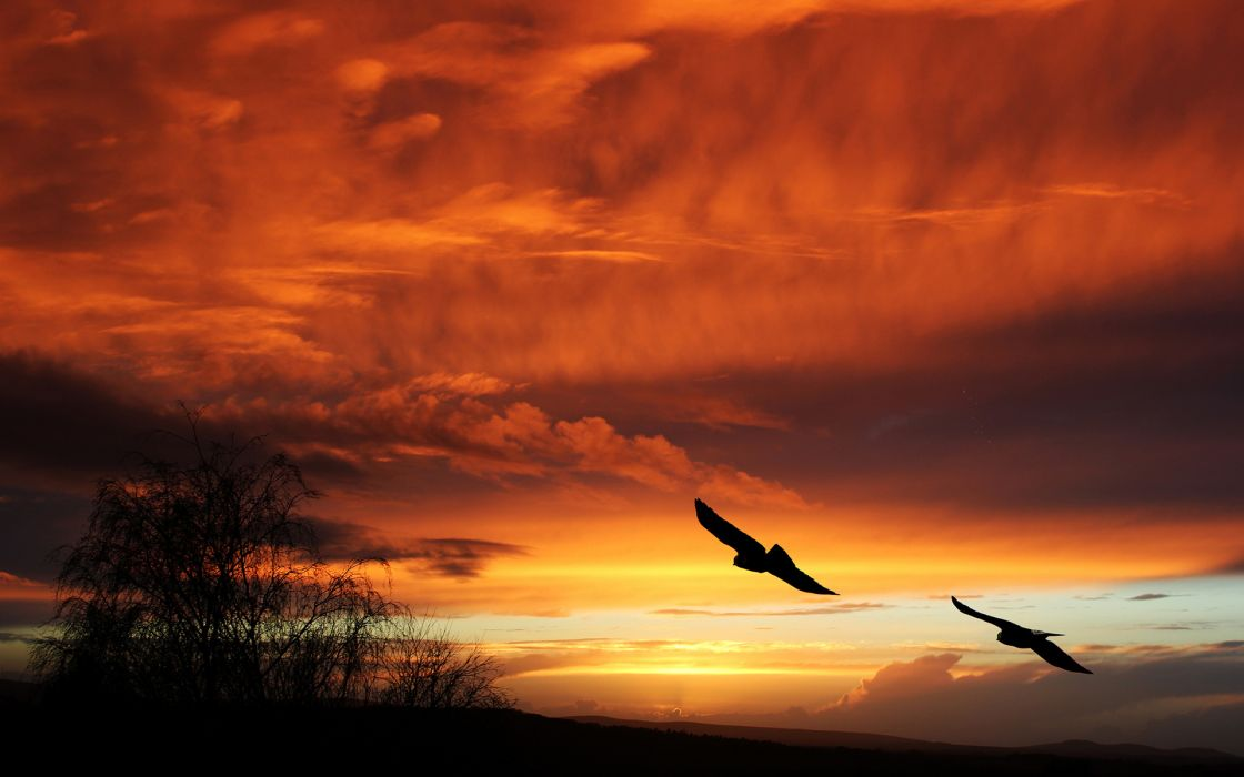 Birds Silhouette Sunset Orange sky flight animals landscapes clouds wallpaper