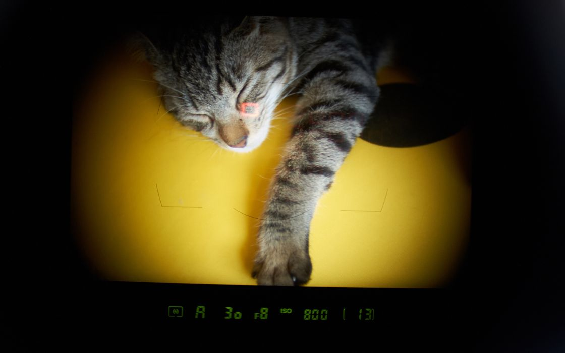 photography camera animals cats viewfinder sleep wallpaper