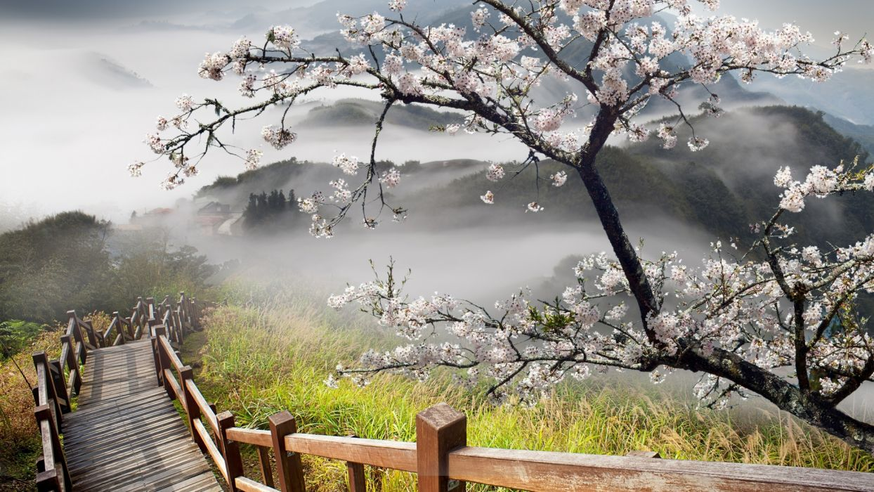 stairs nature landscapes mountains hills trees flowers blossoms architecture fog clouds wallpaper