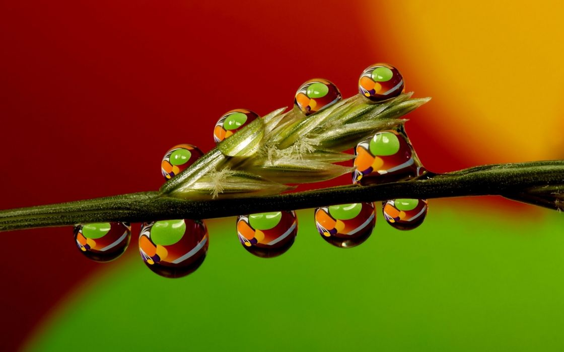 water drops nature plants grass reflection wallpaper