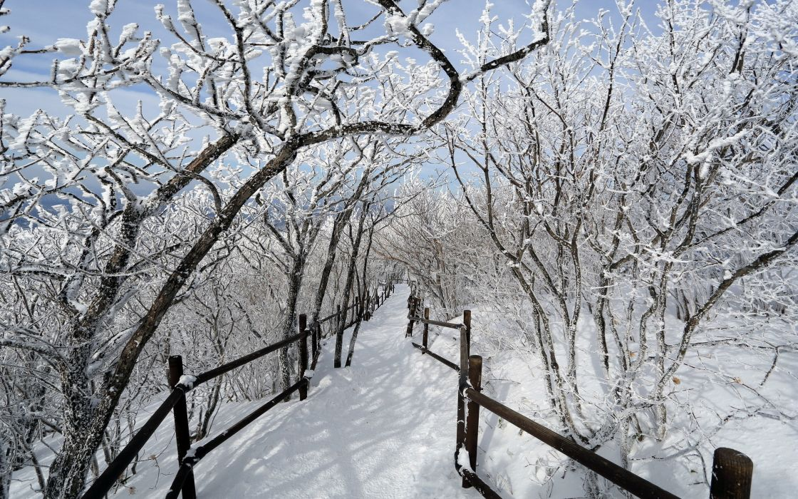 trail path fence trees winter snow orchard nature landscapes wallpaper
