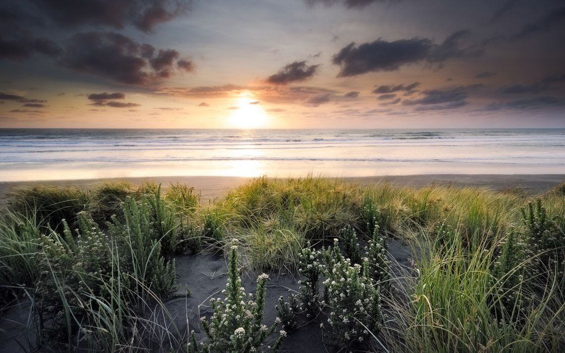 flowers plants grass nature landscapes beaches waves shore coast ocean sea water sky clouds sunrise sunset wallpaper