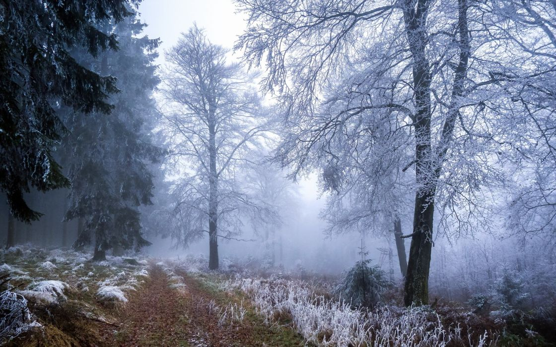 frost autumn fall nature landscapes roads path trail grass trees forest winter fog mist wallpaper