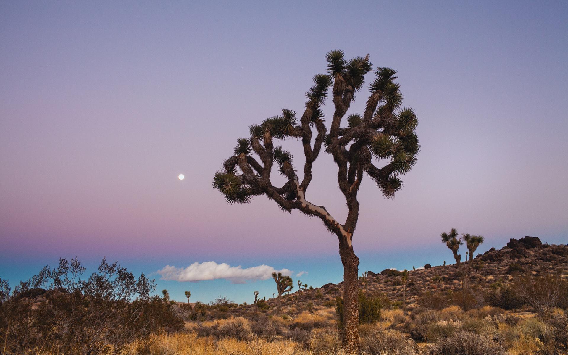 desert plains fields trees plants bush grass sky clouds moon wallpaper HD Wide Wallpaper for Widescreen