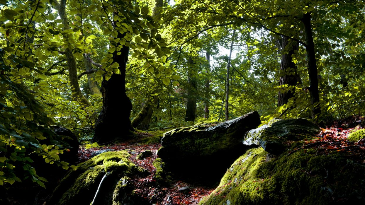 leaves nature landscapes trees forest woods stone rock wallpaper