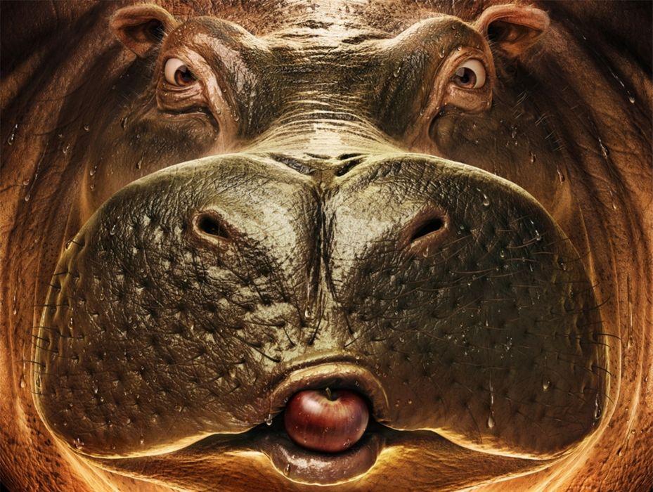 Pedro Conti animals cg digital art fave eyes pov apples fruit humor funny hippo wallpaper