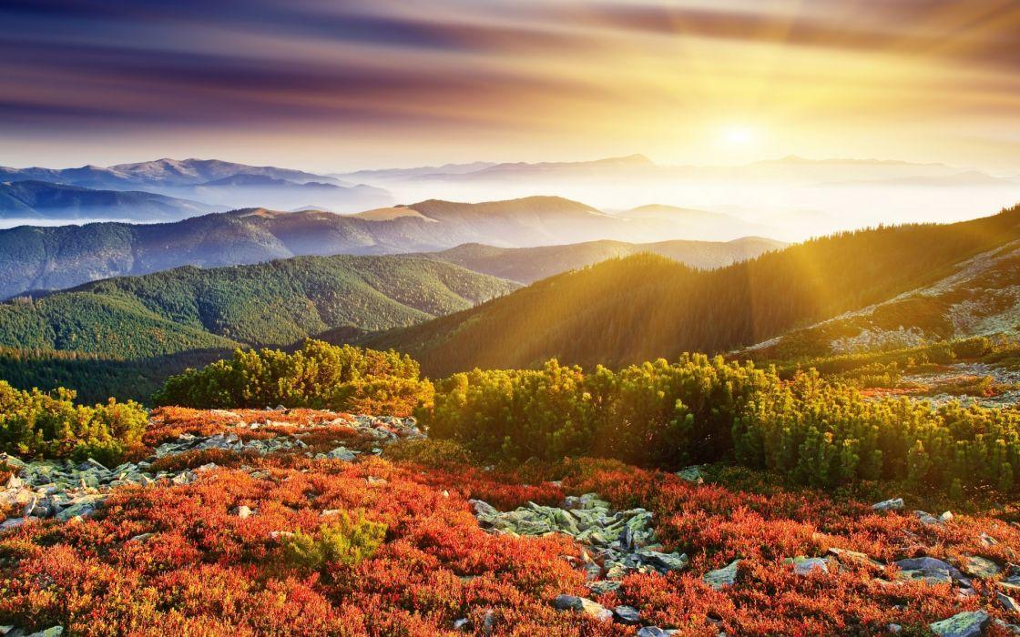 plants nature landscapes mountains bush brush trees forest sunset sunrise sky clouds beams rays fog haze wallpaper