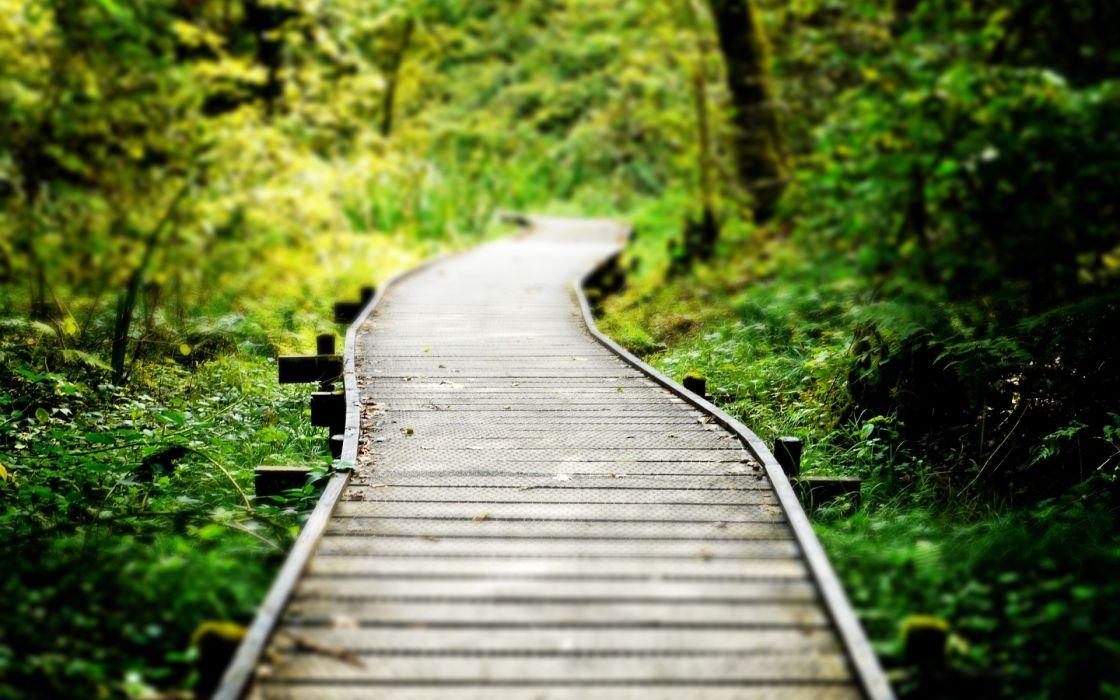 trail path sidewalk walkway macro wood trees forest woods wallpaper