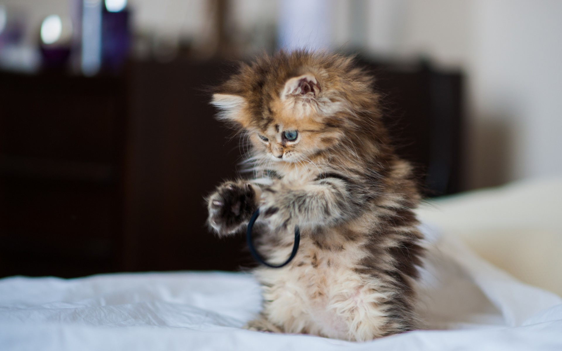 Animals cats felines kittiens babies cute wallpaper
