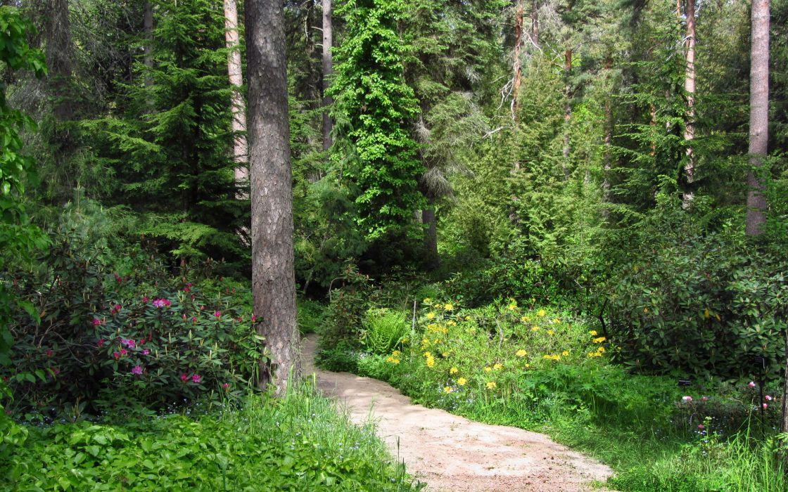 path trail nature landscapes plants flowers bush trees forest woods garden sunlight wallpaper