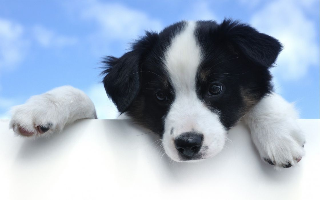 Eyes Pov Cute Animals Canines Dogs Babies Puppy Wallpaper 1920x1200 40746 Wallpaperup