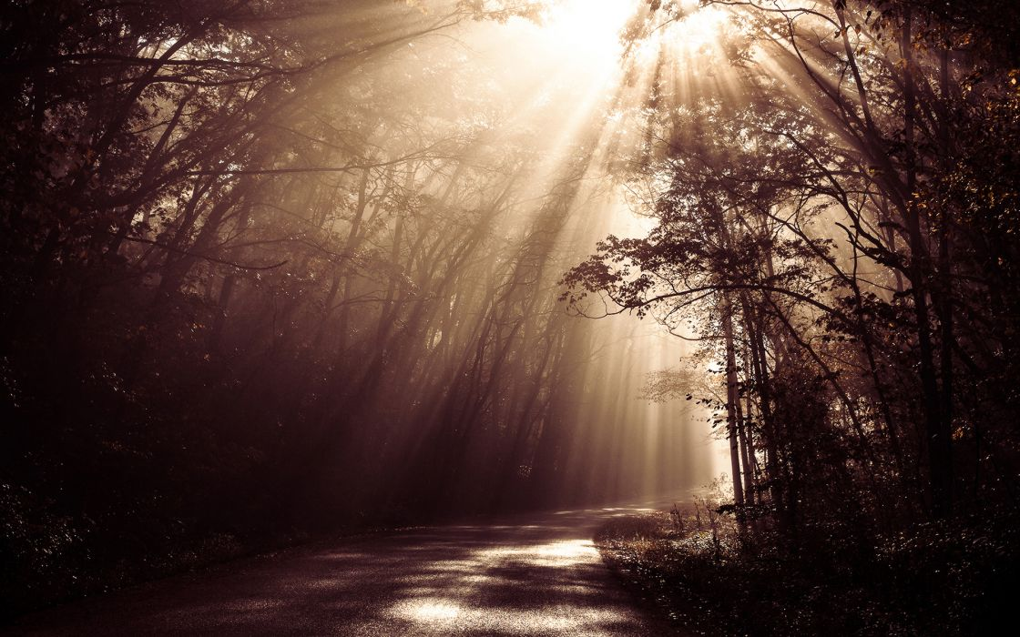 Sunlight Sepia Road Forest Trees beams rays woods sunrise landscapes filtered wallpaper