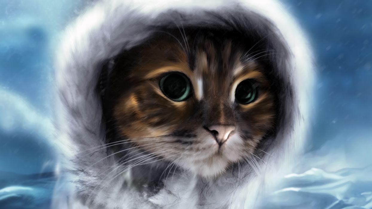art animals cats felines sky clouds face hat wallpaper