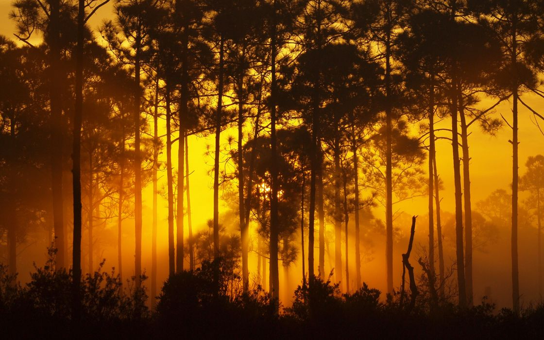 bush nature landscapes trees woods forest sunlight beams rays filtered sunrise sunset glow wallpaper