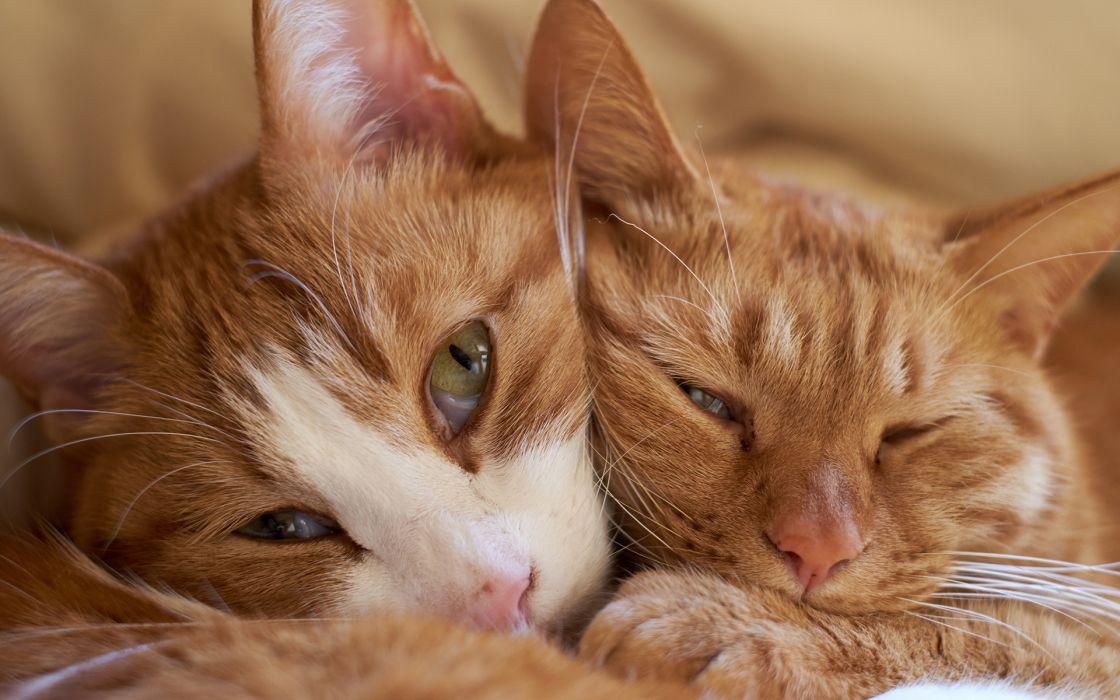 eyes pov face animals felines cats sleep mood cute wallpaper