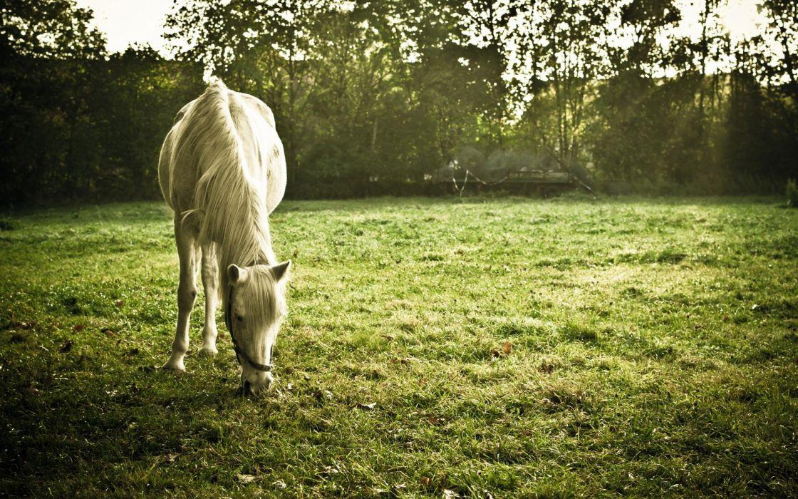 horses grass pasture wallpaper
