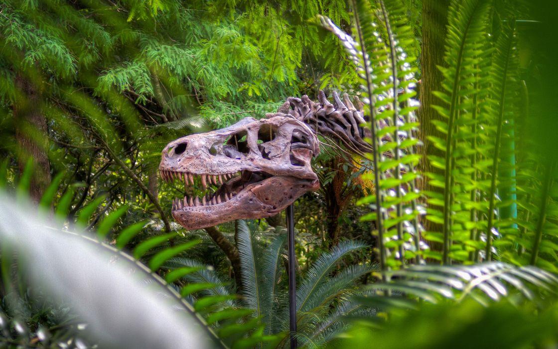 Dinosaur Bones Skeleton Jungle trees forest skulls animals wallpaper