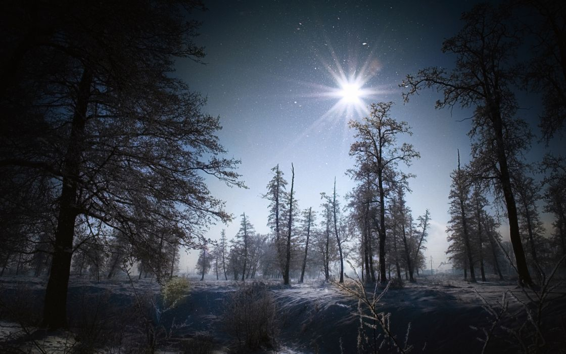 flakes winter snow night moon light landscapes trees forest wallpaper