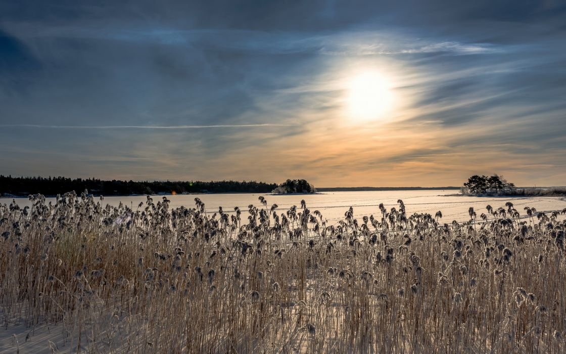 reeds nature landscapes lakes frozen ice sky clouds sunset sunrise winter wallpaper