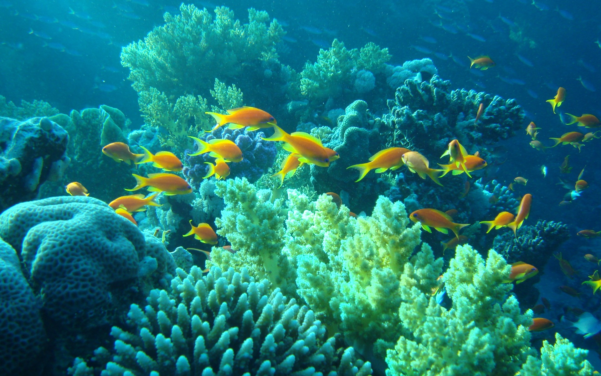 Underwater Egypt sea ocean fishes coral tropical wallpaper ...