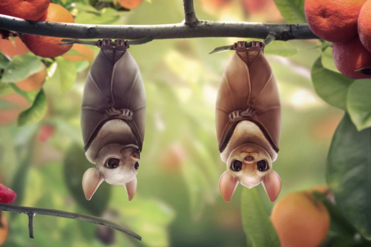 animals bats cartoon face eyes pov animals wallpaper