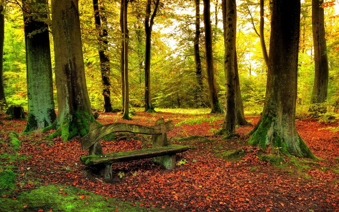leaves trees forest woods sunlight autumn fall nature landscapes leaves bench wallpaper