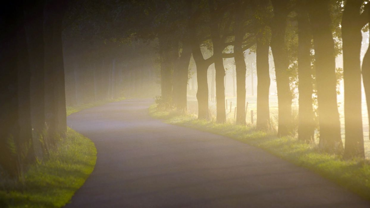 fog mist nature landscapes roads trees morning wallpaper