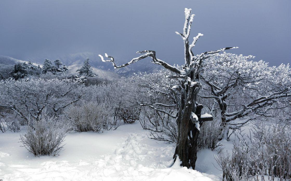 snow winter trees plants bush sky desert nature landscapes mountains wallpaper