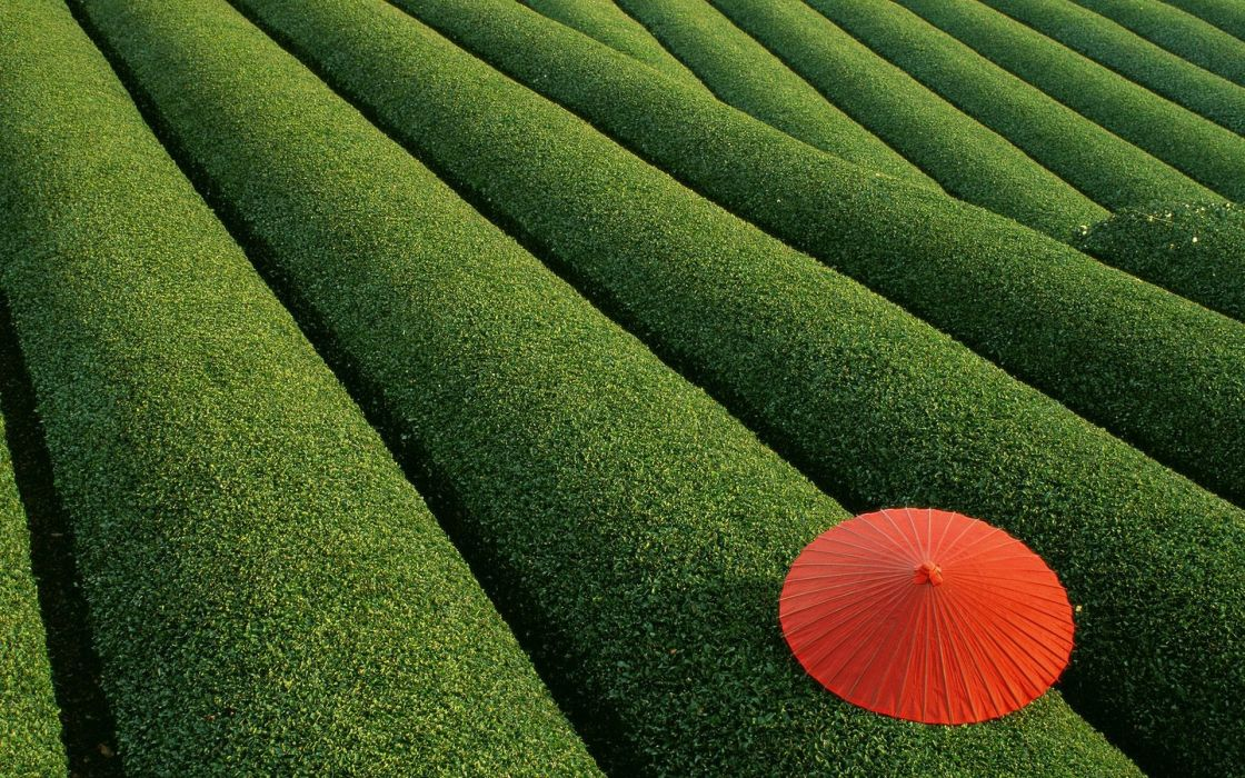 japan red umbrella field wallpaper
