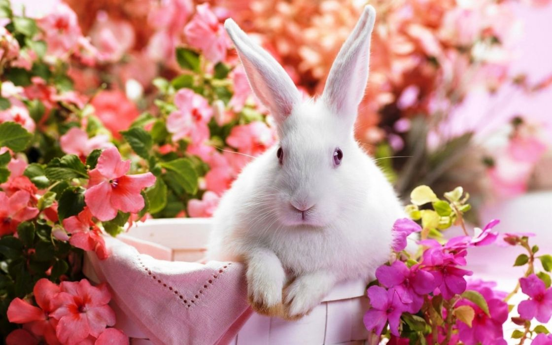 buuny rabbit easter flowers wallpaper