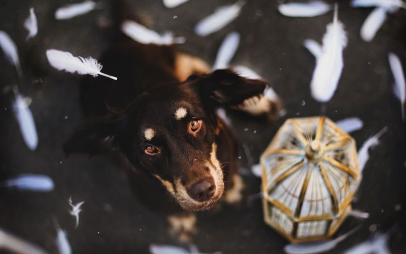 feathers dogs canines cage face eyes pov flight floating wallpaper