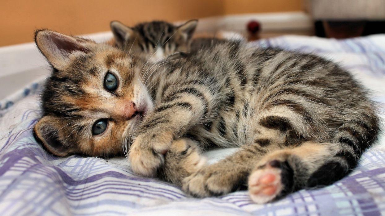 kittens feline babies face eyes pov cats cute wallpaper
